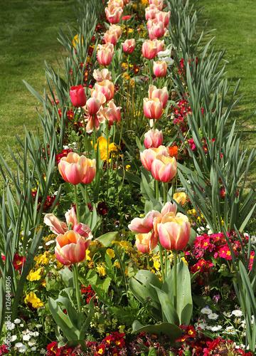 Massif de tulipes Canvas Print