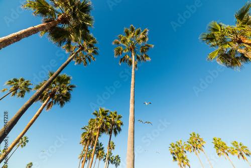 Plakat palmy i mewy w Venice beach