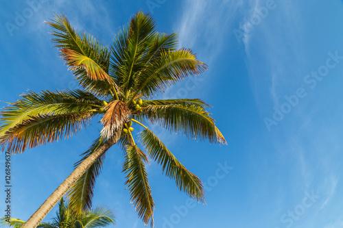 Papiers peints Palmier Palm tree/ A palm tree against beautiful blue sky.