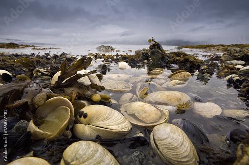 Valokuvatapetti Clamshells on Wilderness Beach, Alaska