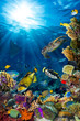 Leinwanddruck Bild underwater sea life coral reef vertical high format with many fishes and marine animals