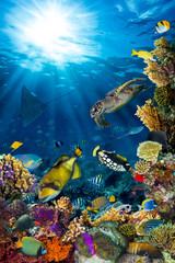 Panel Szklany Marynistyczny underwater sea life coral reef vertical high format with many fishes and marine animals