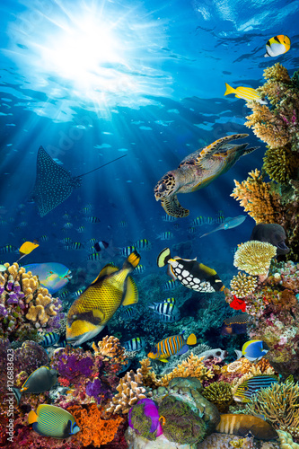 fototapeta na ścianę underwater sea life coral reef vertical high format with many fishes and marine animals