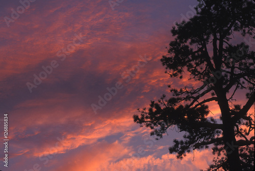 Photo  Alpenglow brings vivid color to this high Sierra Nevada sunset.