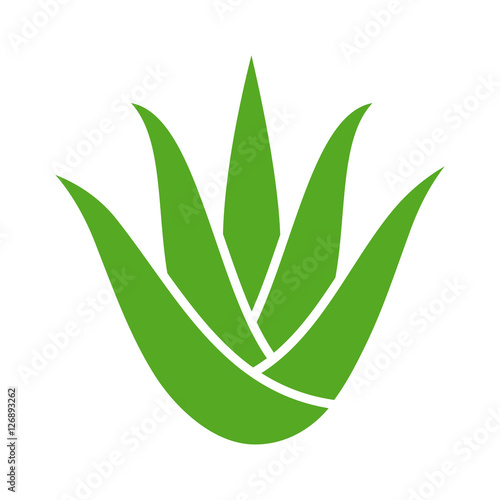 Canvastavla Green aloe vera plant with leaves flat color icon for apps and websites