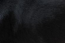 Dog Fur Texture