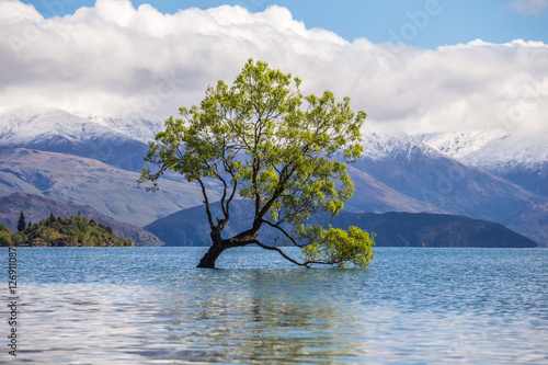 In de dag Bomen A beautiful sunny weather with The Wanaka Tree, Lake Wanaka, Wan