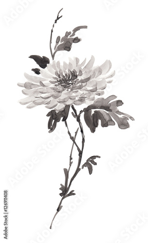 Photo Ink illustration of flower, blooming chrysanthemum in monochrome