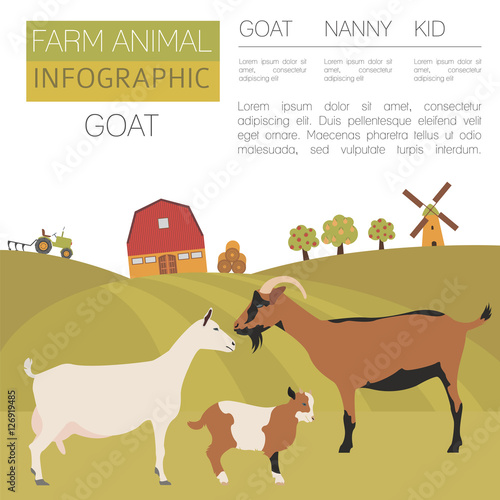 Wall Murals Ranch Goat farming infographic template. Animall family. Flat design