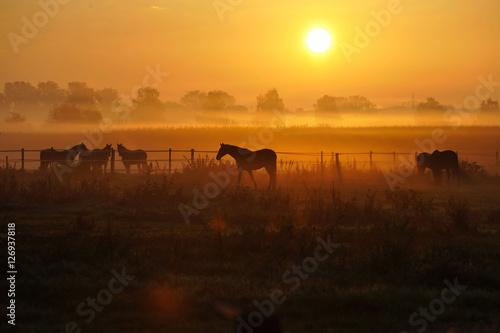 Fototapeta Sonnenaufgang auf einer Pferdeweide obraz