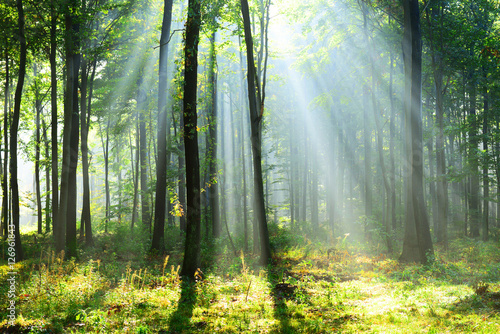 Fototapeten Wald Beautiful morning in the forest