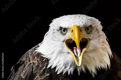 Poster Aigle Squark