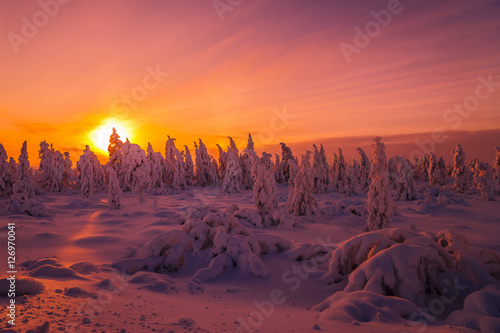 Tuinposter Crimson Winter snowscape. Landscape with forest, winter sun and cliffs