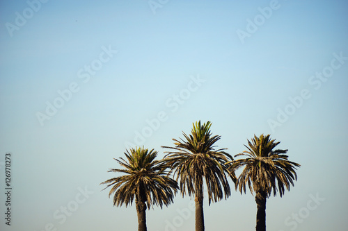 Spoed Foto op Canvas Palm boom tree palm trees