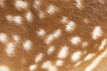 Deer fur closeup view