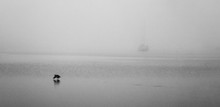 Single Yacht In The Fog With A Flying Bird