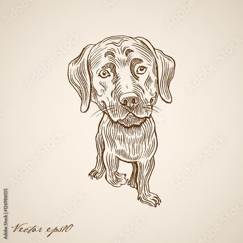 Fotografie, Obraz  Engraving vintage hand drawn vector dog doodle collage