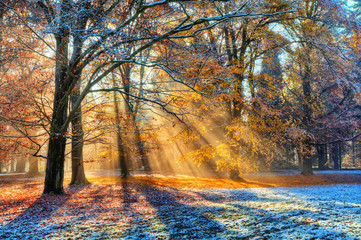 Obraz na Szkle Do jadalni Morning sunrays in winter forest