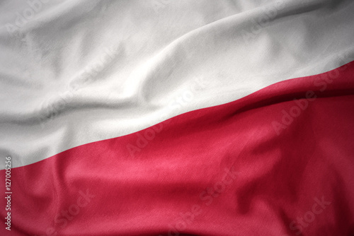 waving colorful flag of poland.
