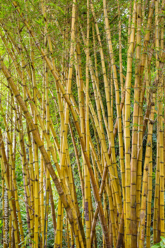 Foto op Plexiglas Bamboe Green bamboo forest in Bali, Indonesia..
