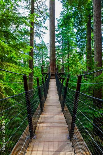 Most wiszący Treetop w parku Capilano, Kolumbia Brytyjska