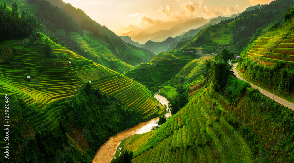 Fototapety, obrazy: Terraced rice field in Mu Cang Chai, Vietnam