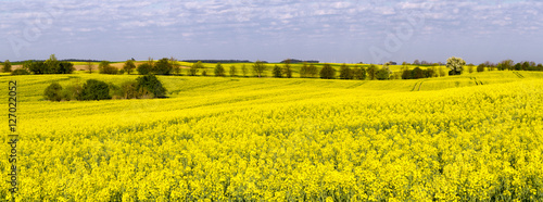 Foto op Canvas Oranje green fields in the spring, rural landscape