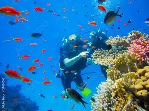 Fotografie, Obraz Дайвинг у коралловых рифов в Египте