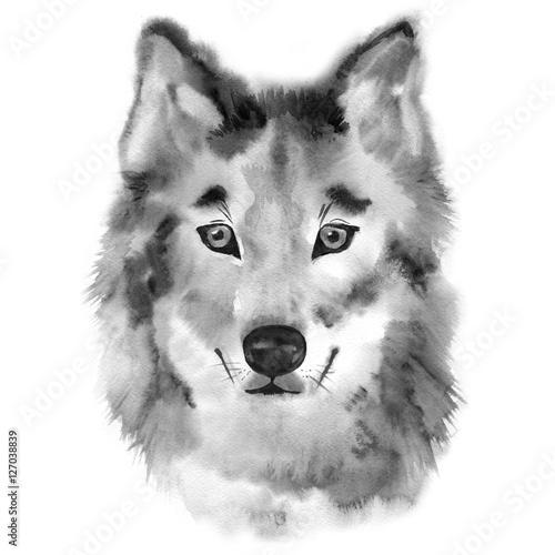 wilcza-reka-malujaca-akwareli-ilustracja-odizolowywajaca-na-bialym-tle
