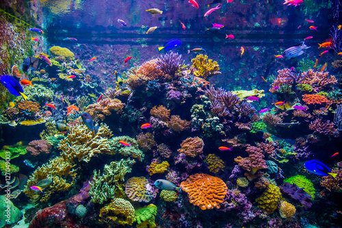 Staande foto Koraalriffen A variety of bright fish move against the backdrop of coral polyps and in the underwater world of a large aquarium (Singapore)