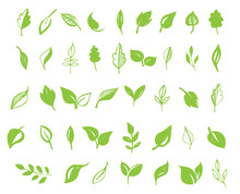 Set Of Hand Drawn Leaves, Green Leaf, Sketches And Doodles Of Leaf And Plants, Green Leaves Vector Collection