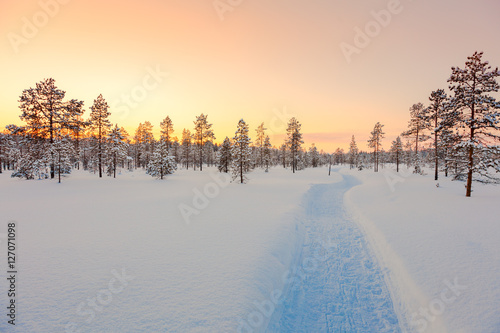Poster Sundown in winter snowy forest, beautiful landscape