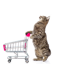 Cat With Shopping Trolley. Isolated On White Background