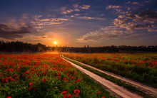 Majestic Foggy Sunrise Over The Poppy Field. Picturesque Scene. Colorful Sky With Overcast Clouds. In The Sunlight. Road To Sun. Breathtaking, Wonderful Scenery.