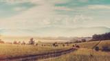 Fantastyczny widok na wschód słońca. droga gruntowa w mglistym wiejskim polu u podnóża góry. majestatyczne szczyty górskie w tle, Dramatyczna malownicza scena. styl retro. kreatywny kolaż - 127079439