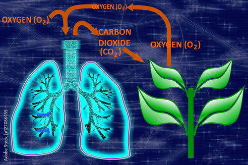 Glowing human lungs oxygen carbon dioxide cycle buy this stock glowing human lungs oxygen carbon dioxide cycle ccuart Images