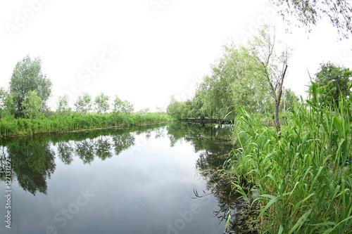Staande foto Paardebloemen en water River landscape, closeup
