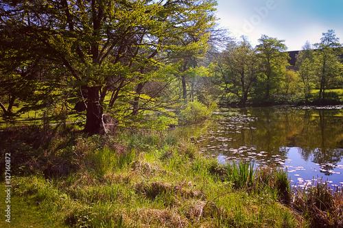 Photo  Quiet corner with pond in Copenhagen park