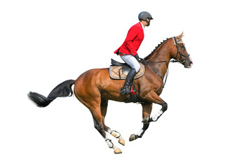 Equestrian sport: rider isolated on white background.