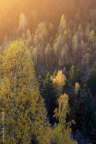 Keuken foto achterwand Bossen The rural houses on mountain farm in forest under rocks. Morning frost in magical golden autumn. In the backlight warm sunbeam light and a light shallow fog. Yellow-hot leaves on the tops of birches.