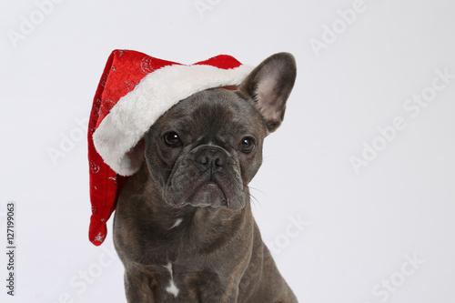 Staande foto Franse bulldog Weihnachtsgruß mit französischer Bulldogge