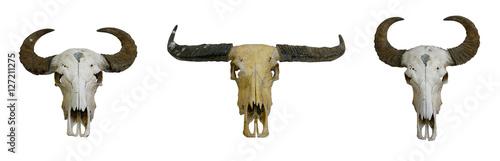 Foto op Plexiglas Buffel buffalo skull