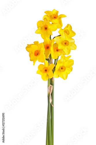 Deurstickers Narcis Yellow and orange flowers of a tazetta daffodil isolated