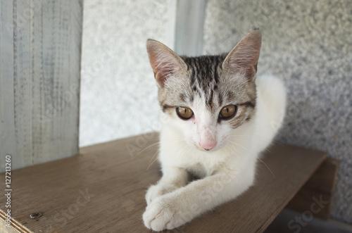 Fotografia  adorable domestic cat