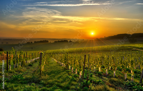 Photo sur Toile Vignoble vineyard Bergerac two
