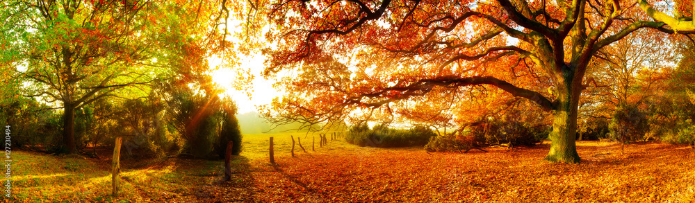 Fototapety, obrazy: Landschaft im Herbst mit Wald und Wiese bei strahlendem Sonnenschein