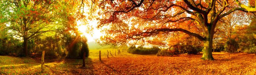 FototapetaLandschaft im Herbst mit Wald und Wiese bei strahlendem Sonnenschein