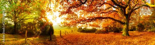 Papiers peints Miel Landschaft im Herbst mit Wald und Wiese bei strahlendem Sonnenschein