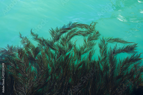 Fotografia Algae and seaweed on the pier in the lagoon of Grand Canal in Venice, Italy