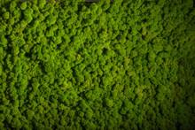 Reindeer Moss Wall, Green Wall...